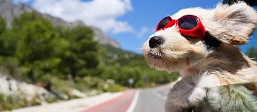 Turismo pet friendly